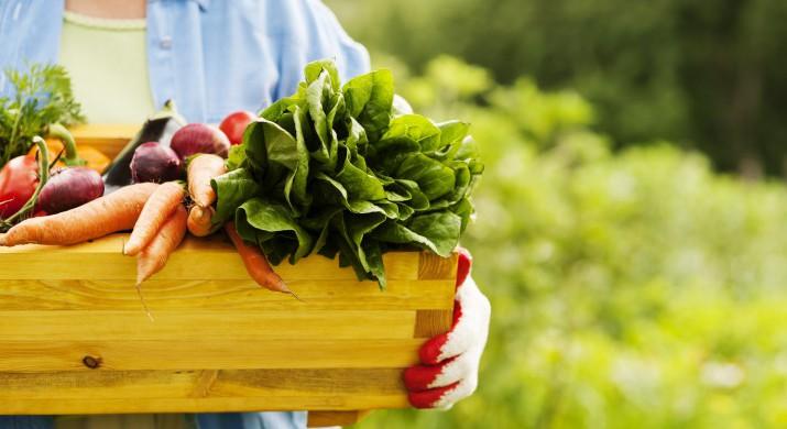 Produção orgânica mostra tendência de crescimento no país, dizem especialistas