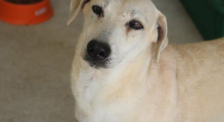 Cachorro que chama Max, representando a ONG Paraíso dos Focinhos